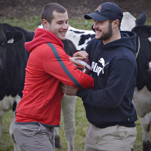 les jumeaux breton-robert jonathan et vincent avec des vaches