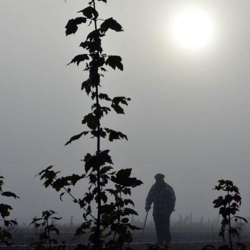 Un vieil homme marche dans un champ