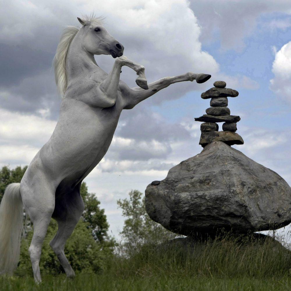 Un cheval blanc sur 2 pattes avec un inukshuk