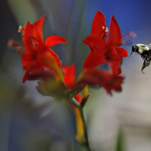 un thon sur une fleur