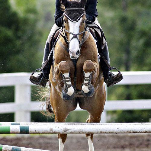 un joker saute avec son cheval