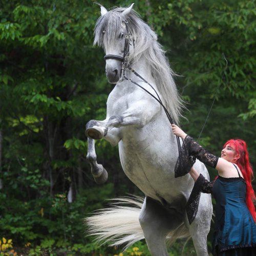 Un cheval blanc sur ses 2 pattes de derrière