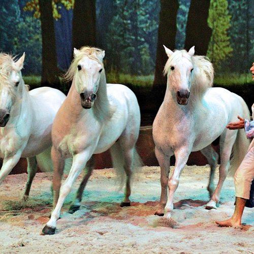 frédiric Pignon en prestation dans le spectacle Cavalia avec ses chevaux et le célèbre cheval Templado
